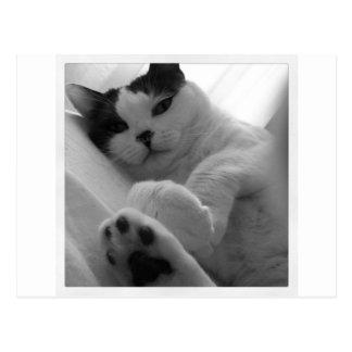 Carte Postale Noir et blanc de chat