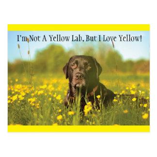 Carte postale noire de chien de Labrador