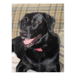 Carte postale noire de Labrador