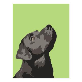 Carte postale noire de Labrador (choisissez votre