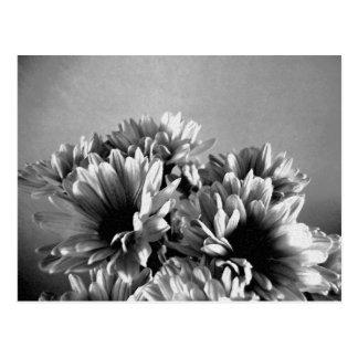 Carte postale noire et blanche de Floreal
