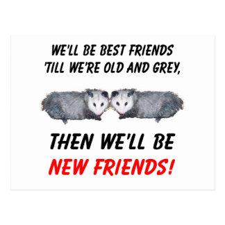 Carte Postale Nouveaux vieux amis avec des opossums