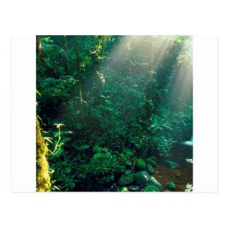 Carte Postale Nuage Costa Rica de Monteverde de forêt