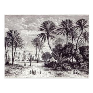 Carte Postale Oasis de Gafsa : Tunis
