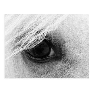 Carte Postale Oeil de cheval en noir et blanc
