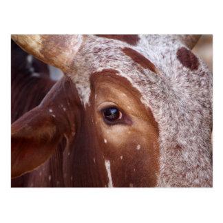 Carte Postale Oeil de vache