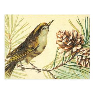 Carte Postale Oiseau avec l'illustration de cru de cône de sapin