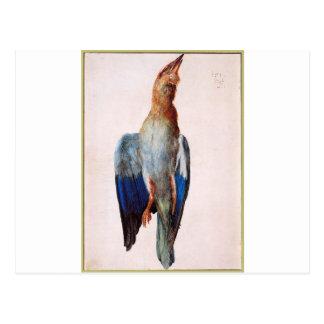 Carte Postale Oiseau bleu mort par Albrecht Durer