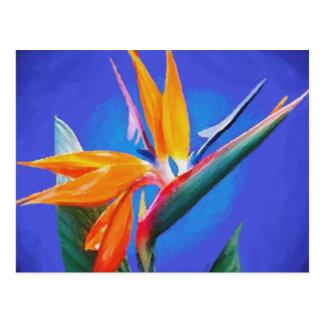 Carte Postale Oiseau de fleur de paradis