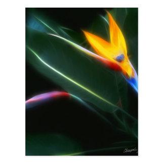Carte Postale Oiseau de lueur du paradis 2