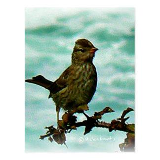 Carte Postale Oiseau de Rockport