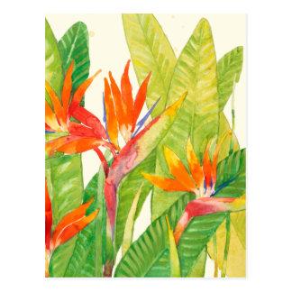 Carte Postale Oiseau des fleurs | du paradis tropical
