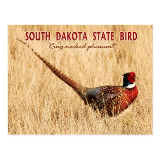 Carte Postale Oiseau d'état du Dakota du Sud : faisan