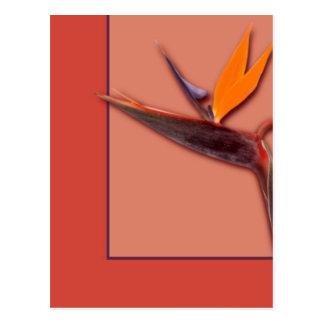 Carte Postale Oiseau du paradis