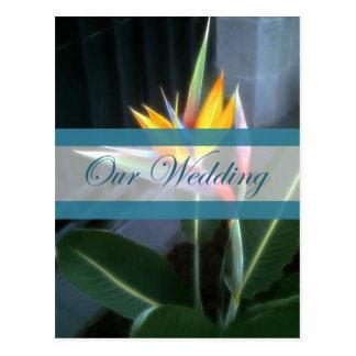Carte Postale Oiseau du paradis 10 notre mariage