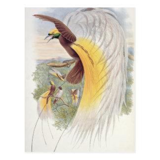 Carte Postale Oiseau du paradis, des 'oiseaux de New Guinea