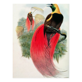 Carte Postale Oiseau du paradis, gravé par T. Walter
