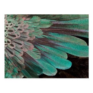 Carte Postale Oiseau superbe des plumes de paradis