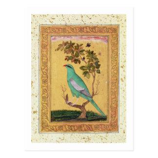 Carte Postale Oiseau vert, Mughal (gouache sur le papier)