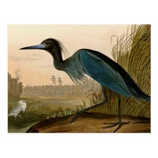 Carte Postale Oiseaux bleus de héron de grue d'Audubon de