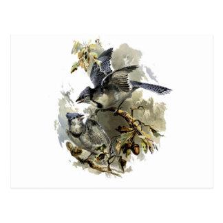 Carte Postale Oiseaux chanteurs