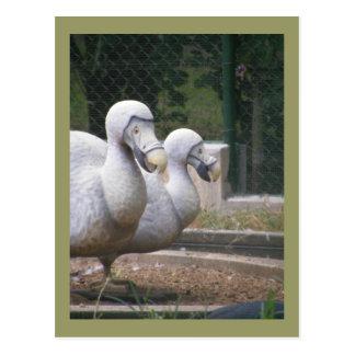 Carte Postale Oiseaux de dronte