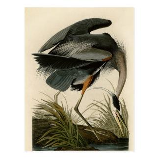 Carte Postale Oiseaux de héron de grand bleu d'Audubon