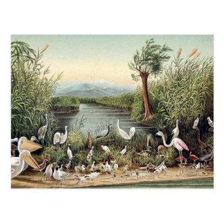 Carte Postale Oiseaux du Caucase