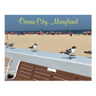Carte Postale Oiseaux du Maryland de ville d'océan