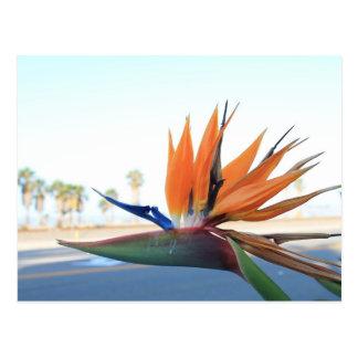 Carte Postale Oiseaux du paradis sur la plage