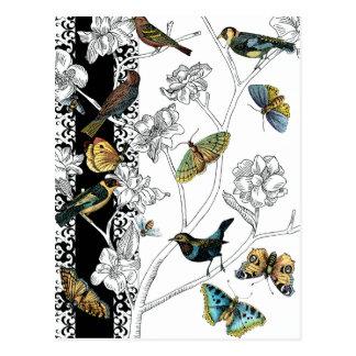 Carte Postale Oiseaux et papillon sur un arrière - plan noir et