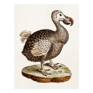 Carte Postale Oiseaux vintages de dronte de 1700s d'illustration