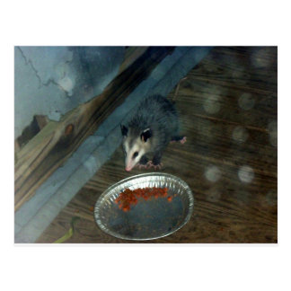 Carte Postale Opossum 1 d'enfant en bas âge