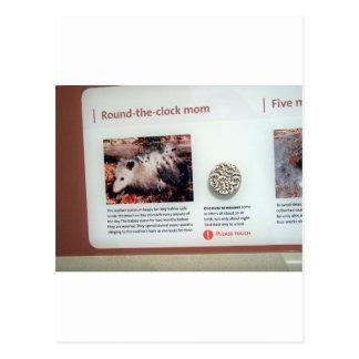 Carte Postale Opossum de la Virginie (virginiana didelphe),