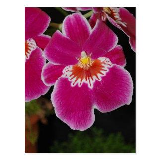 Carte Postale Orchidée de pensée d'eros de Miltonia