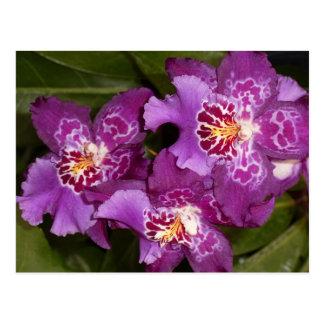 Carte Postale Orchidée pourpre