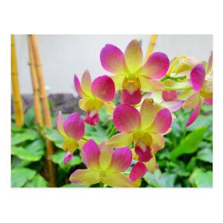 Carte Postale Orchidées roses jaunes