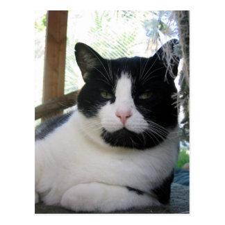 Carte Postale Oreo le chat