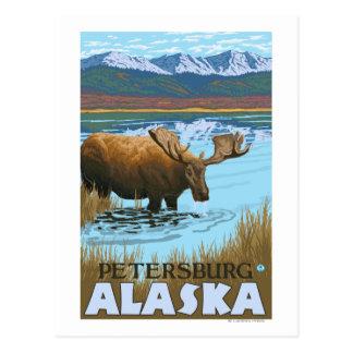 Carte Postale Orignaux buvant au lac - Pétersbourg, Alaska