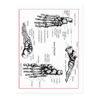 Carte Postale Os de pied