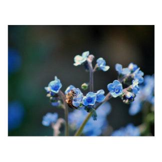 Carte Postale Oubliez-moi pas fleur, abeille et signification