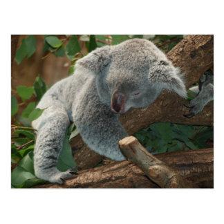 Carte Postale Ours de koala si mignon