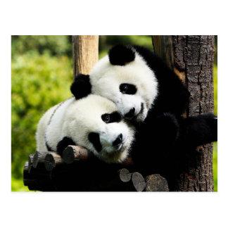 Carte Postale Ours panda