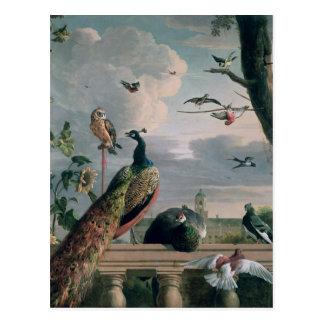 Carte Postale Palais d'Amsterdam avec les oiseaux exotiques