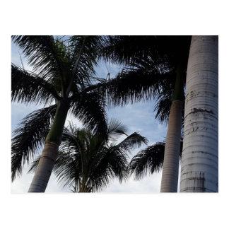 Carte Postale Palmiers de Ténérife