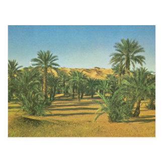 Carte Postale Palmiers, EL Adjal, Libye de Wadi