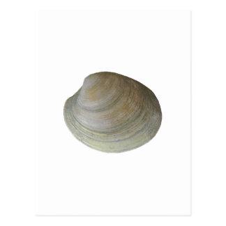 Carte Postale Palourde de clam (sans titre)