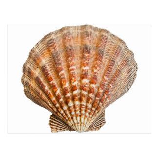 Carte Postale Palourde Shell