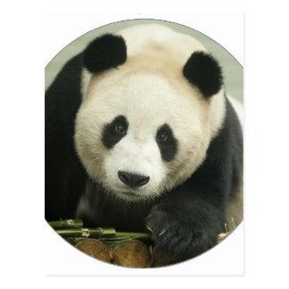 "Carte Postale ""Panda """