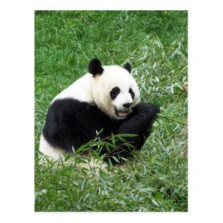 Carte Postale Panda géant mangeant le bambou